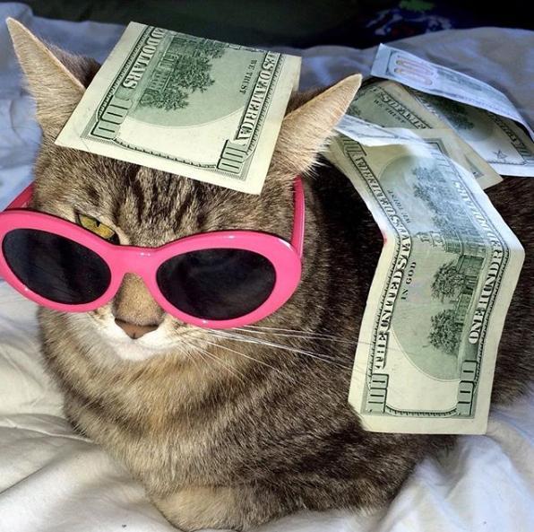 Gangsta mačke 3