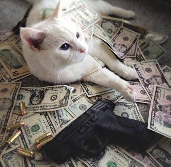 Gangsta mačke 4