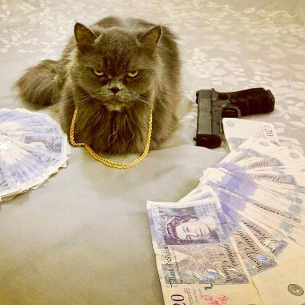 Gangsta mačke 8