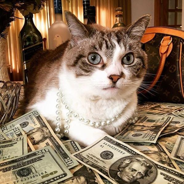 Gangsta mačke 9
