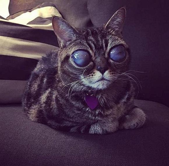 Upoznajte Matildu, mačku s najčudnijim očima na svijetu