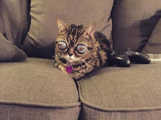 Mačka Matilda 4