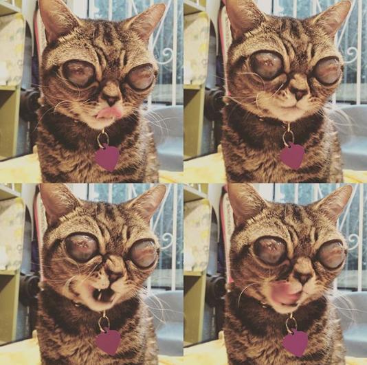 Mačka Matilda 2