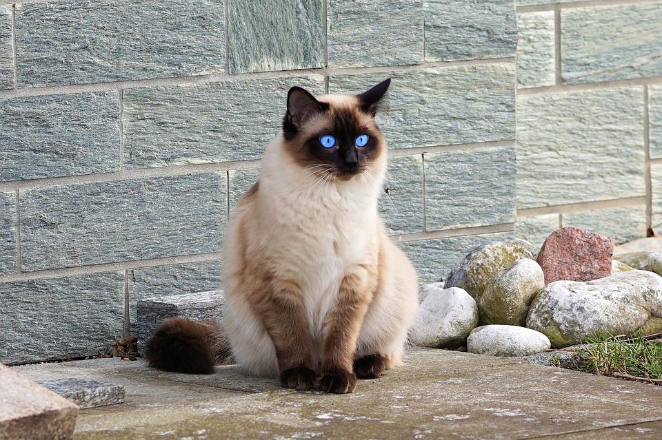 Mačka zuri