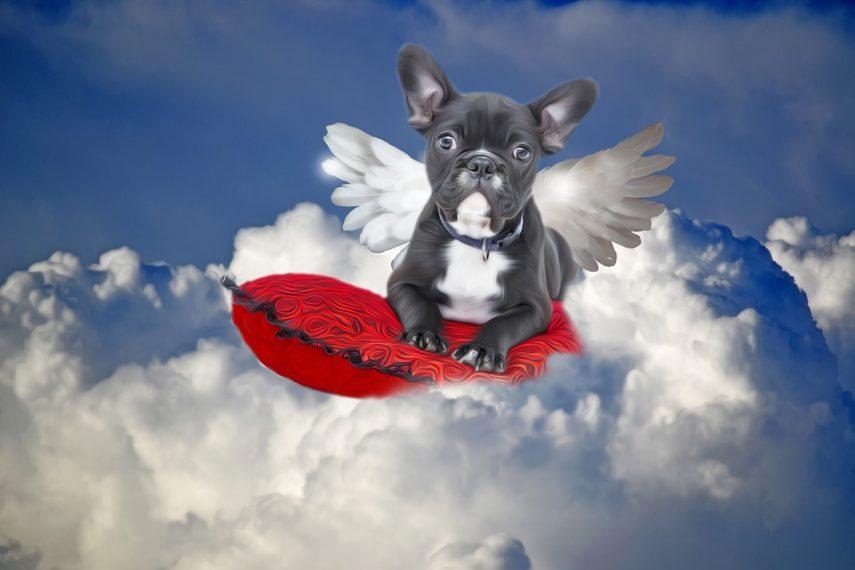 Dok nas smrt ne rastavi: Lik oteo znanstvenika da bi učinio svog psa besmrtnim