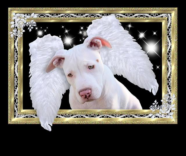 Pseći anđeo