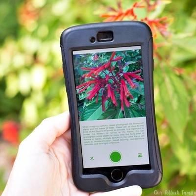 Aplikacija za biljke 3
