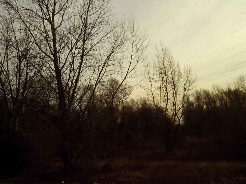 Slijeđenje potoka 29