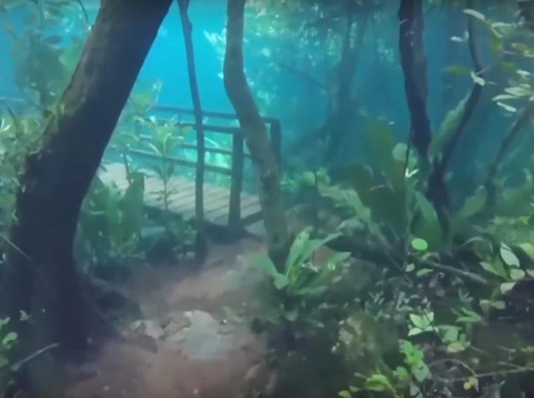 Nestvarni prizori iz brazilske podvodne džungle