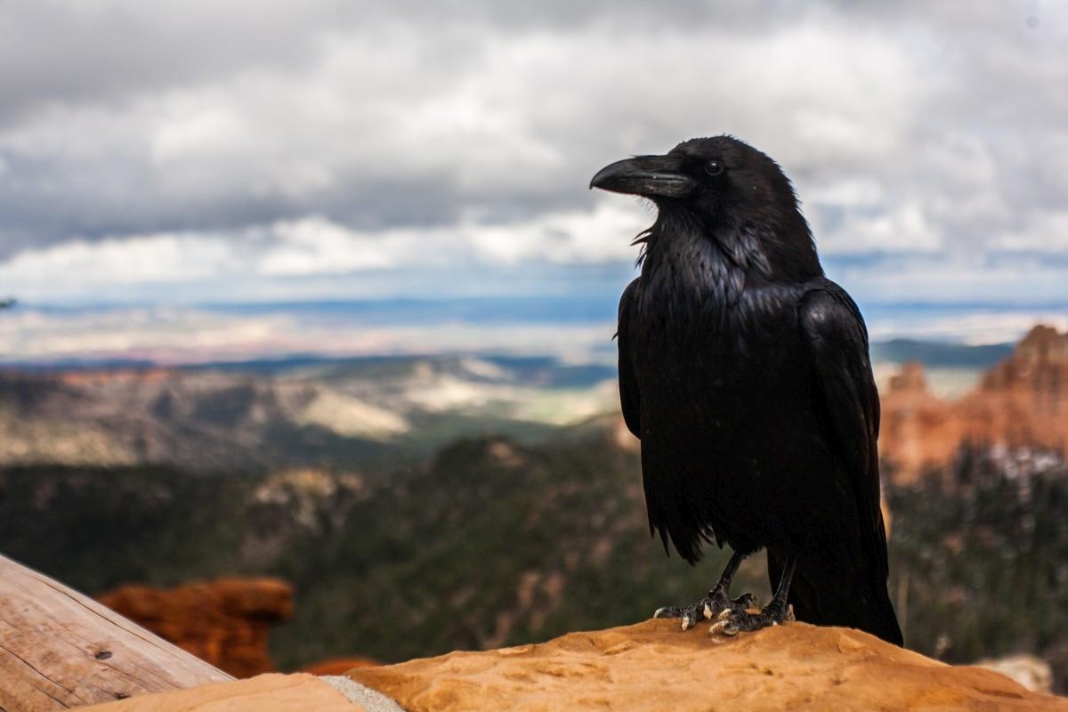 Vrane 2