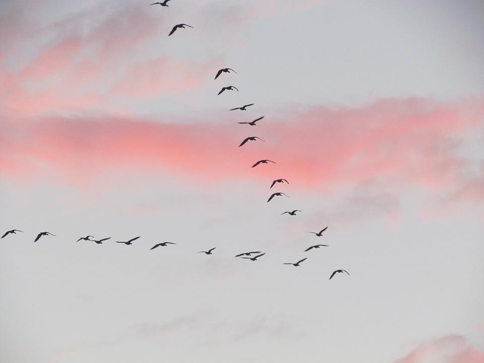 Let ptica