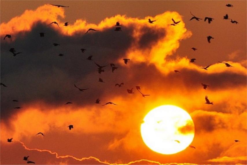 Galerija nekih od najljepših vrsta ptica koje je moguće vidjeti i u Hrvatskoj