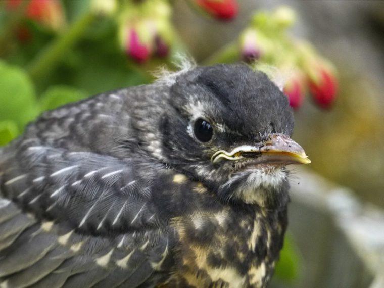 Otkriveno na koji se način ptice orijentiraju prema Zemljinim magnetskim polovima