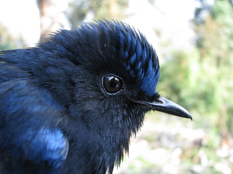 Pticje oko 2