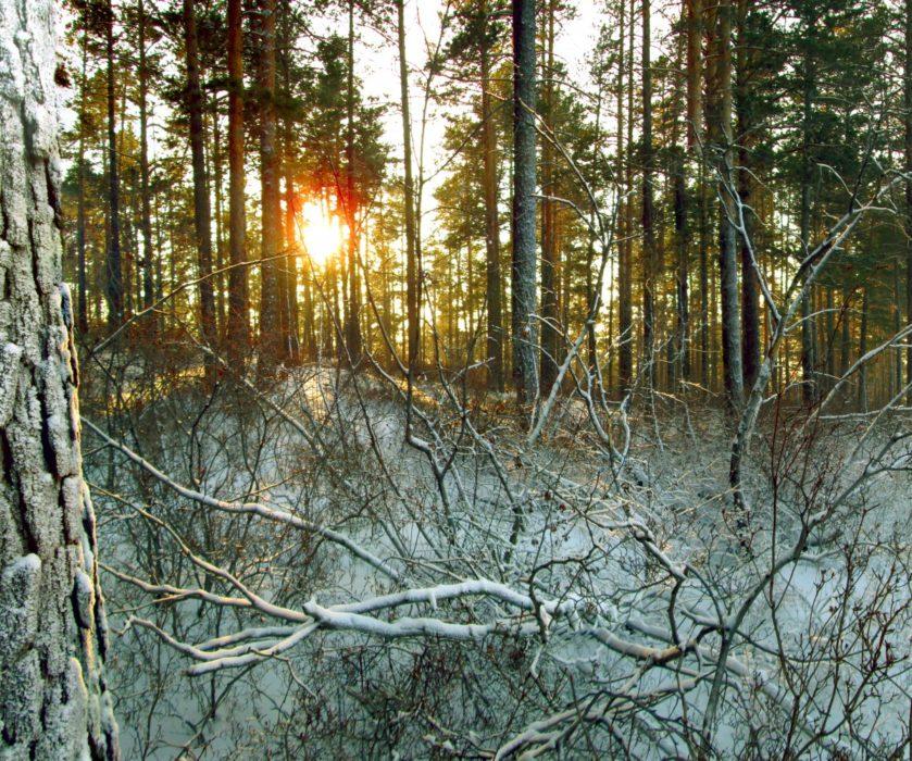 Suma pod snijegom