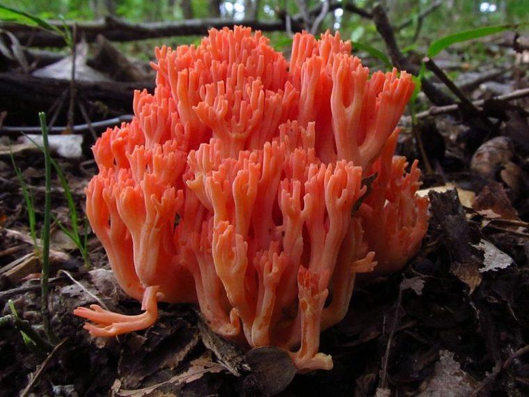 Lista 12 naljepših gljiva na području Hrvatske