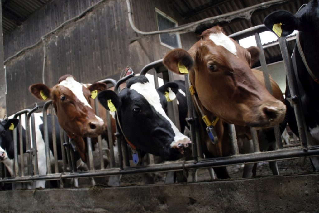 Farmske životinje