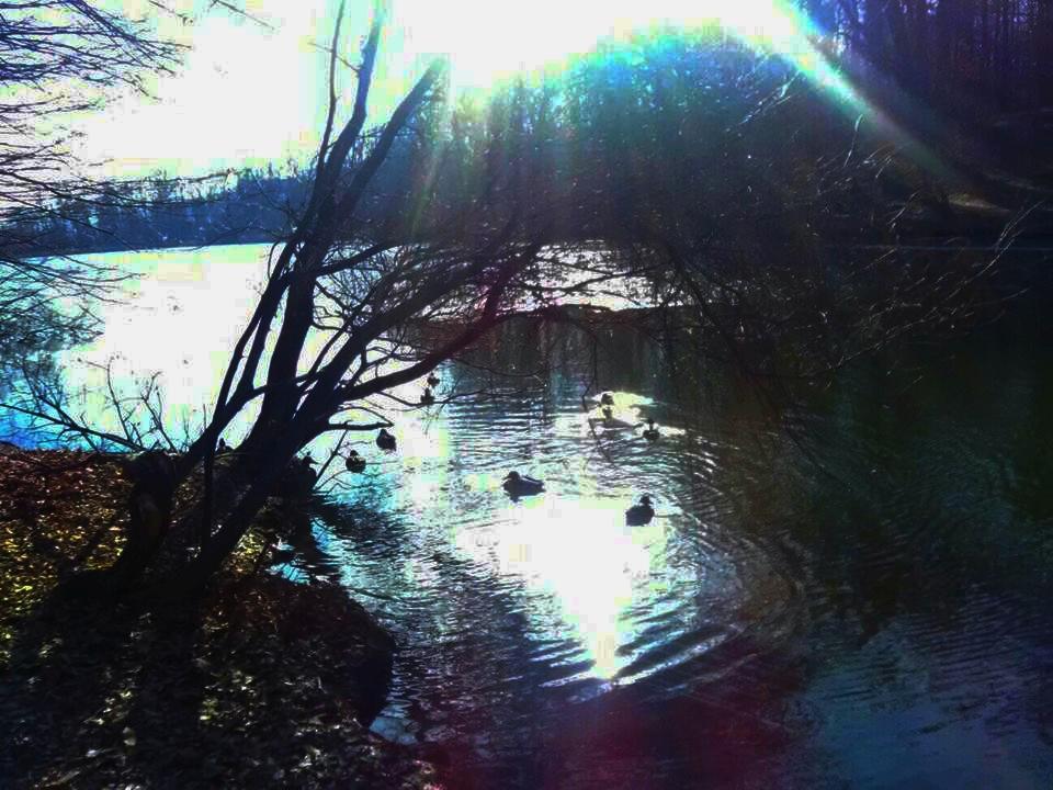 Maksimirsko jezero i patke