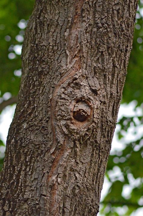 Drvo s licem