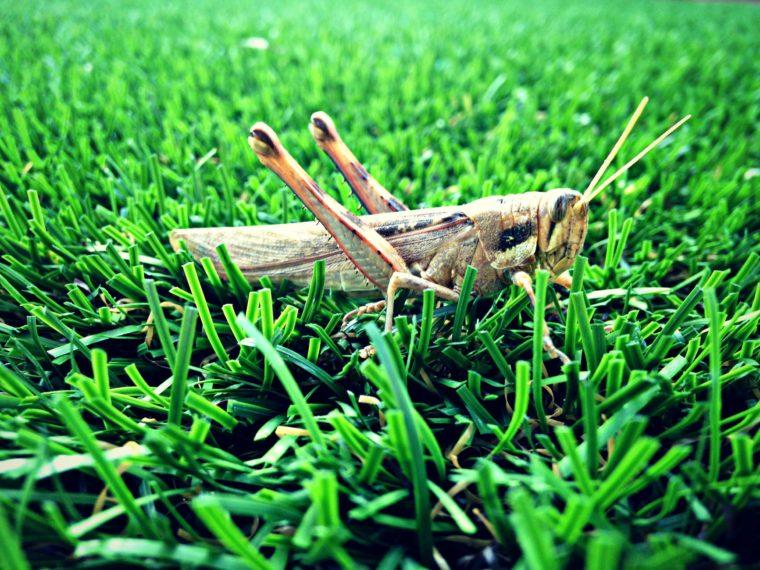 Što se dobije kad se uspori snimljeni pjev cvrčaka? Nešto van ovoga svijeta!