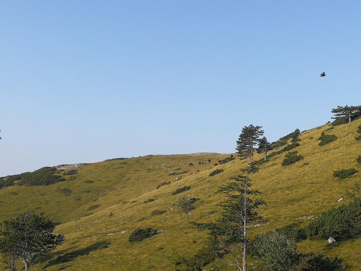 Grobničke Alpe 33