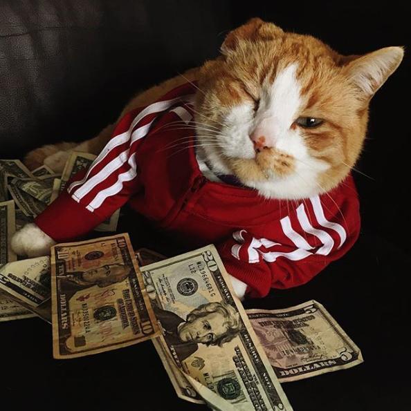 Mačke koje uživaju u životu superzvijezda i bogatih gangstera