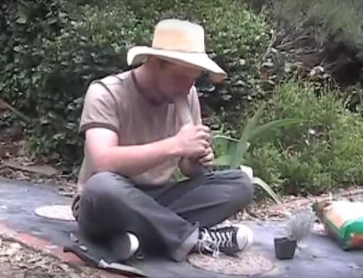 Viralna snimka: Spaljeni lik pokušava vrtlariti napušen od žalfije!