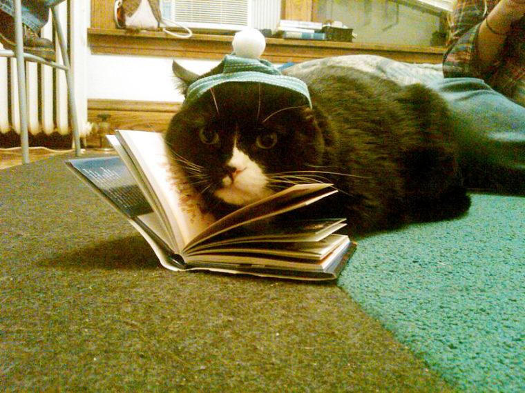 Volite mačke? Volite knjige? Onda je ovo za vas!