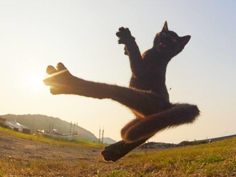 Fotografije mačaka u pozama ninja ratnica popravit će vam cijeli dan :)