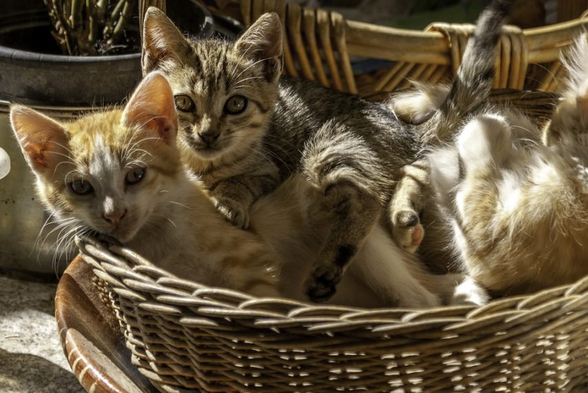 Zajedno otkrivamo priču iza osječkog spomenika ženi okruženoj mačkama, tzv. Mačkamami